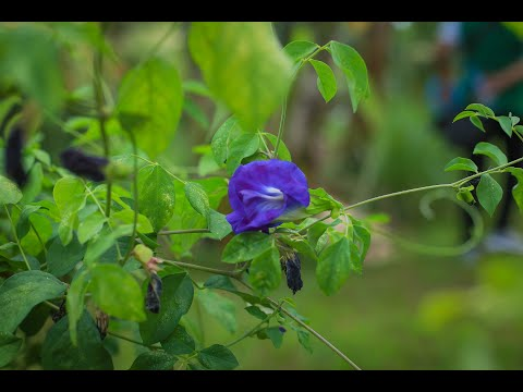 Urban Agriculture in the Philippines