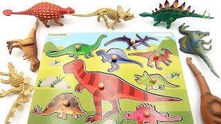 Learn Dinosaur Names With Dino Wooden Puzzle! Real Dinosaur Toys And Dino Bone~ transformer Toys