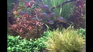 180g Planted Aquarium