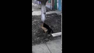 кот хочет собаку
