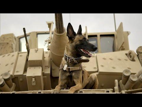 MAX Movie Trailer (Dog