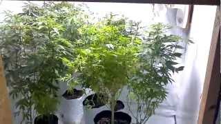 Indoor Soil Grow - Part 1 - NEW SEEDS & HARVEST MACROS