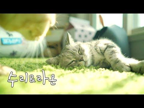 엄마 고양이와 딸 고양이가 꽁냥꽁냥해요^^