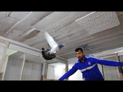 SAHİPLENDİRİLDİ. Bu Kadroyu Alan,KAZANIR. 18 Tane Taklacı Oyun Kuşu 1000 Puan. Darıca.