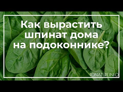 Вопрос: После чего посадить шпинат?