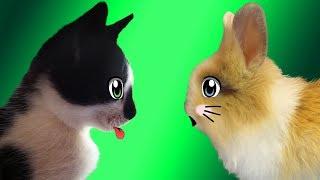 Кролик БАФФИ и КОТ МАЛЫШ ! СПИННЕР кролика БАФФИ ! СУПЕР КОТ в гостях у кролика