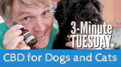 CBD for Dogs and Cats- Is it Safe, and Should You Use It?