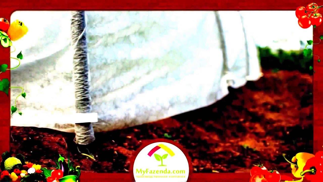 Коллекция 118 черкасская людмила григорьевна, 620026 екатеринбург ул. Тверитина 34 секция 9 кв. 520, подснежник снежный, (галантус белоснежный) обычная форма (высота 10см, листья темно-зеленые сизые узкие, цветки колокольчатые белые), 'flore pleno' (махровая форма). Цена луковицы 100-.