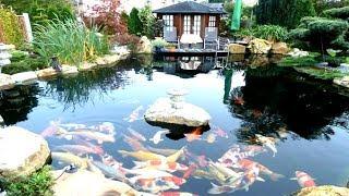 Cá Cảnh -  Hồ Cá Chép Koi Tiền Tỷ   Bồng Lai Tiên Cảnh