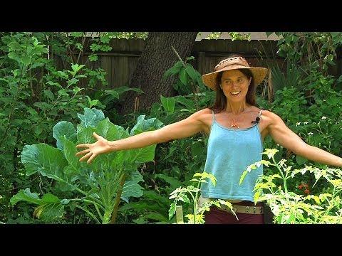 Permaculture Paradise: Val & Eli's Summer Abundance Part 1!