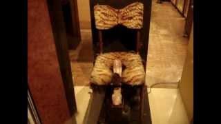 Video Erotic chair with rotating tongue download MP3, 3GP, MP4, WEBM, AVI, FLV Oktober 2017
