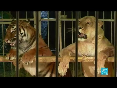 France to ban wild animals from travelling circuses, mink farms 'gradually'
