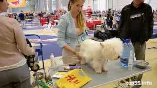Международная выставка собак для ТОП55