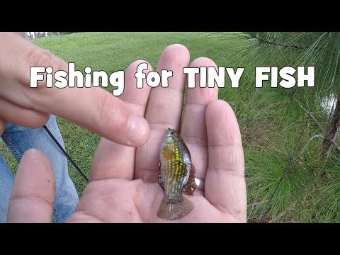 Fishing for TINY NATIVE, & EXOTIC Fish in CENTRAL Florida (G