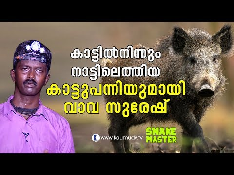 OMG! Vava Suresh with a wild boar that came out from the wild   Vava Suresh   Snakemaster