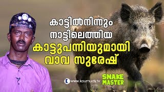 OMG! Vava Suresh with a wild boar that came out from the wild | Vava Suresh | Snakemaster thumbnail