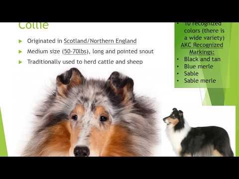 FFA- Dog Breeds Identification Video