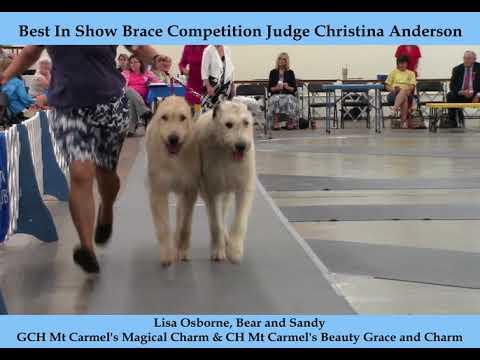 8-12-2018 Arkansas KC Brace   Irish Wolfhounds