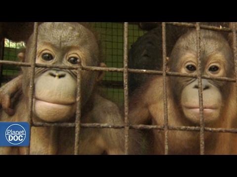 Full Documentary - Tourism vs Extinction
