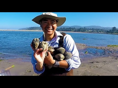 Digging for clams in Oregon. How and where to catch giant clams during low tide