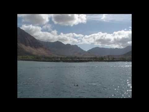Dolphin Cruise Hawaii