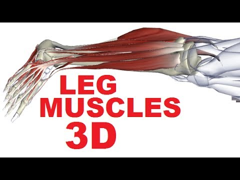 Muscles of the Leg Anatomy Part 1 - Anterior Compartment - YouTube