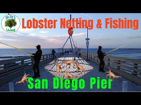 Lobster Netting & Fishing San Diego Pier