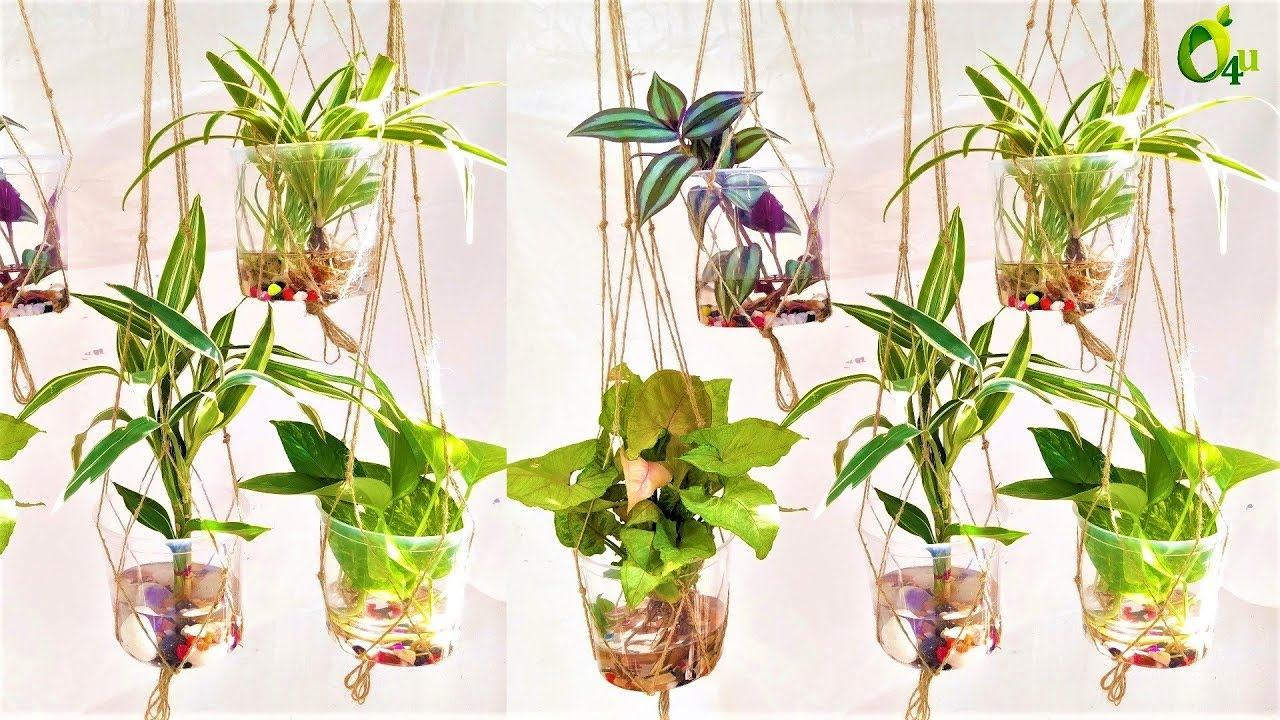 Hanging Water Garden/Indoor Water Plants Garden/Water Garden Plants/GARDEN20U
