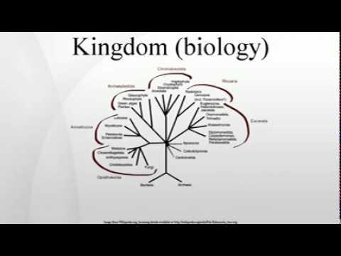 Kingdom (biology)