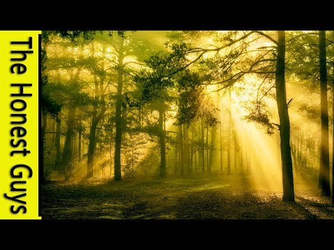Relaxing Forest & Nature Sounds: The Forest Of Lorne | Study, Relaxation, Sleep