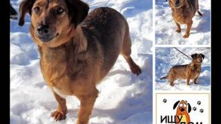 Белгород. Сообщество помощи животным ОБЕРЕГ ВКонтакте