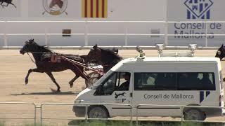 Vidéo de la course PMU PREMI ANGELUS II