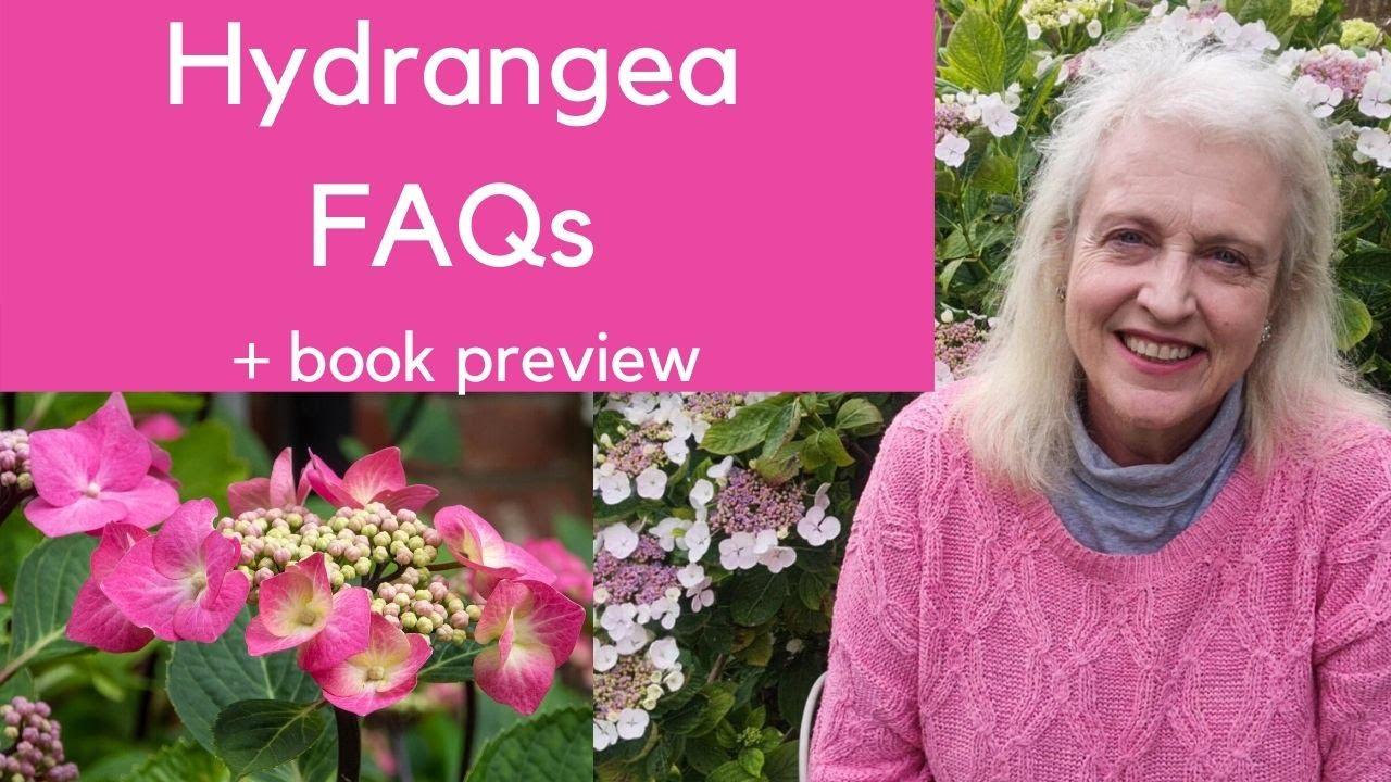 Hydrangeas - six months interest for your garden!