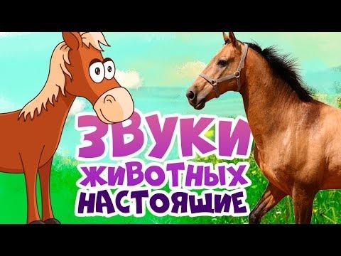 Как говорят животные для самых маленьких видео
