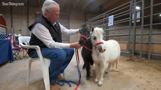 Tiny horses became an obsession for Buda man