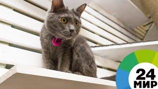 видео День Эрмитажного кота в Петербурге
