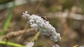 Stewarding Pollinators