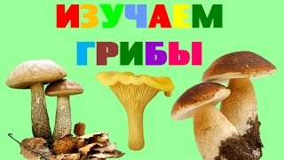 Изучаем грибы. Названия грибов. Стихи про грибы для детей. Обучающее видео для малышей
