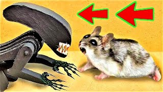 🐹Alien Hamster Maze with Traps 😱[OBSTACLE COURSE]😱
