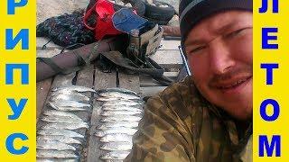 Whitefish Рипус ПОШЁЛ! тУРГОЯК. Фантастическая рыбалка и рипусы монстры!!!