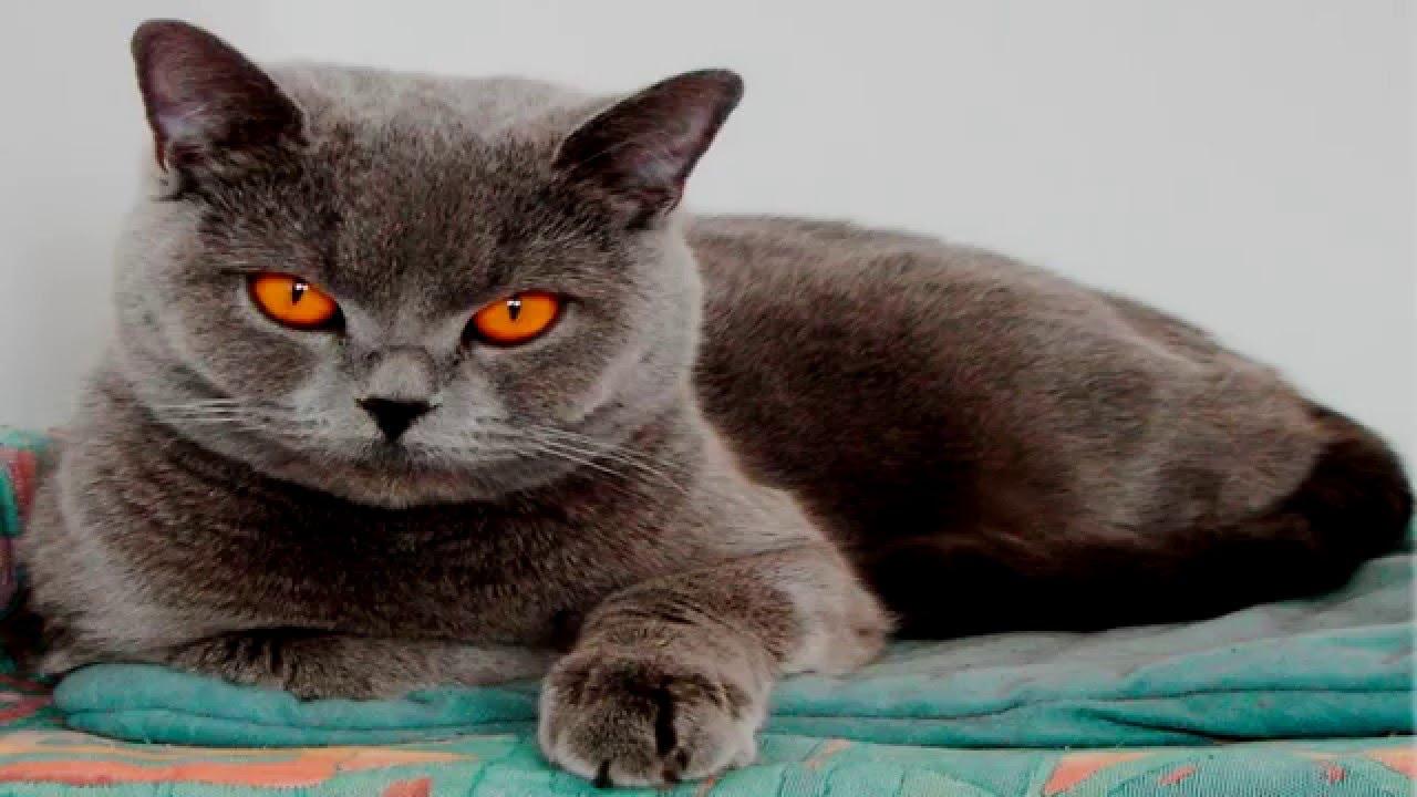 Объявления о продаже котят, кошек и котиков. Уссурийск.