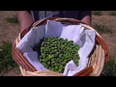 Kea Friendly Farm - Organic Farming Products