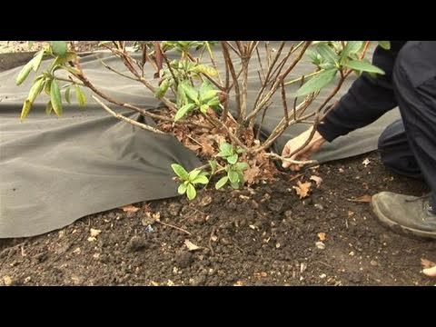 How To Keep Weeds From Growing Using Sheet Mulch Youtube