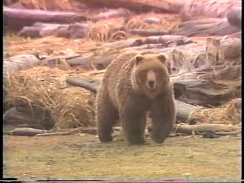archie-nesbitt---brown-bear-(world-record)-hunt