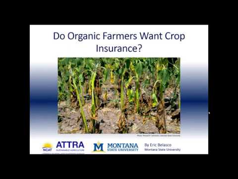 Do Organic Farmers Want Crop Insurance