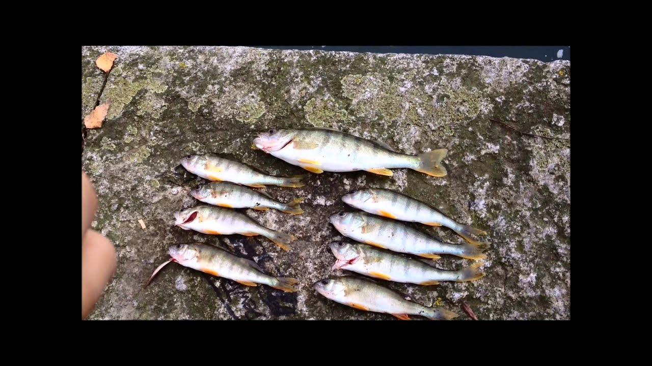 angeln am rhein auf barsche youtube