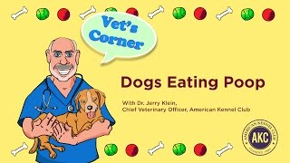 Dogs Eating Poop | Vet's Corner with Dr. Jerry Klein