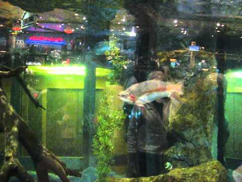 bass Pro shop in Airdrie, AB