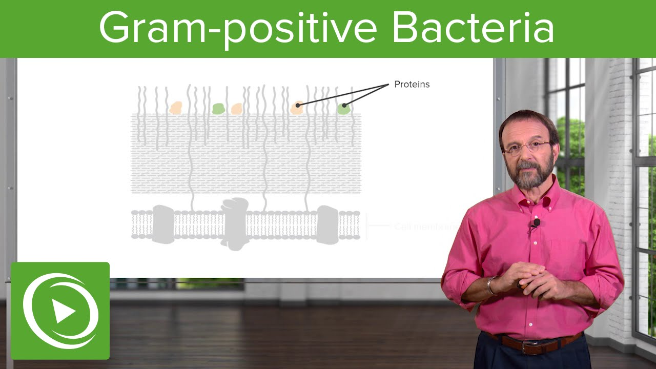The Gram-positive Solution: Overview & Structure– Microbiology | Lecturio