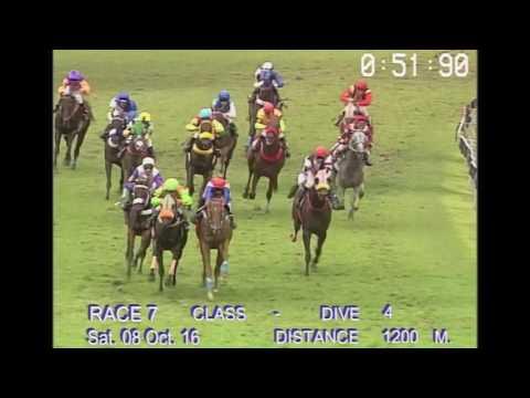 ม้าแข่งสนามฝรั่ง วันเสาร์ที่ 8 ตุลาคม 59 เที่ยว 7 ม้าชั้น 4